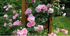 Gradini tematice - Rozariul (gradina cu trandafiri)