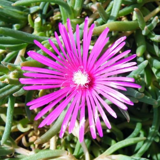 Floare de Cristal