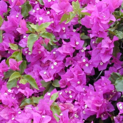 Floare de Hartie