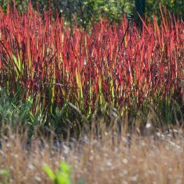 Plante Acvatice Pentru Iazuri Lacuri Fantani Arteziene Si