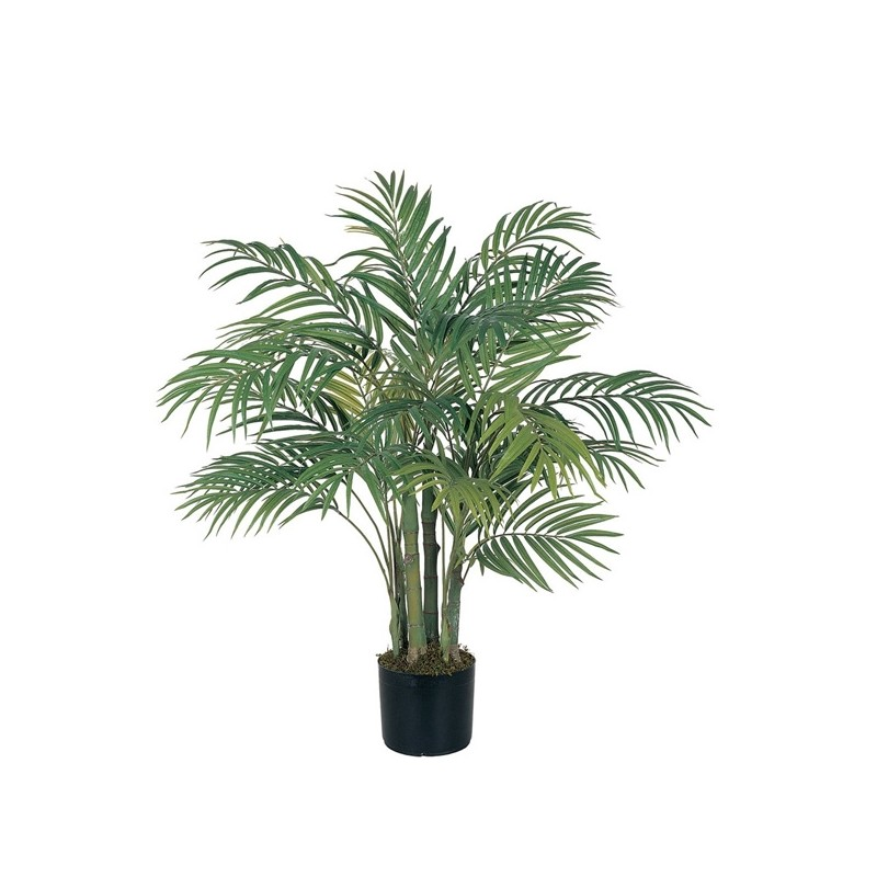 Plante De Interior Of Areca